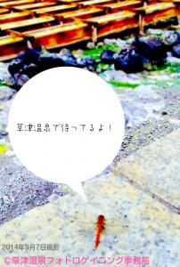 草津トンボ
